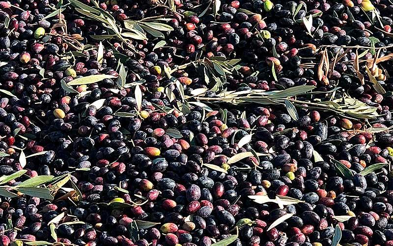 el aceite de marta aceite de oliva